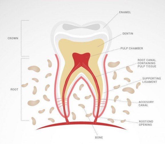 root canal dentist in glenview